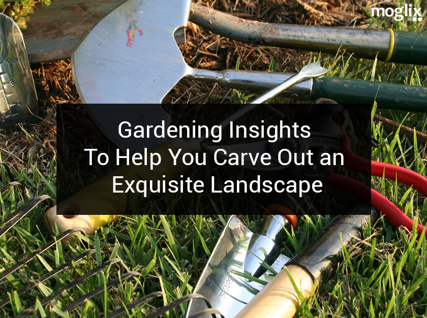 Gardening Insights: To Help You Carve Out an Exquisite Landscape
